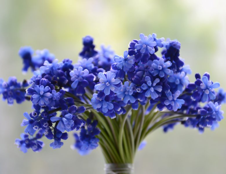 Flowers bouquet blue beautiful blossom