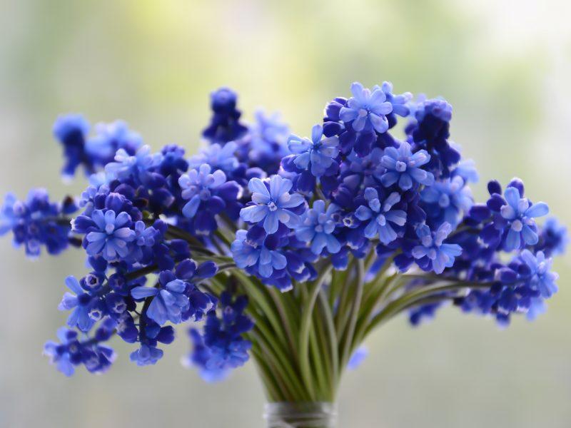 Flowers bouquet blue beautiful blossom
