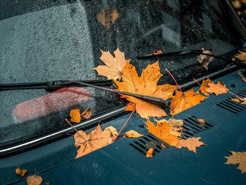 Dry leaf blown on winter season loved